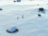 安徒生原版《冰雪女王》定档8月3日  金球奖参选动画强势登陆中国