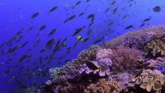 追逐珊瑚 预告片