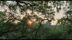 生命之树 制作特辑之克里斯托弗·诺兰、大卫·芬奇推荐