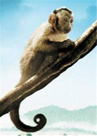《亚马逊萌猴奇遇记》先导预告 萌猴闯荡亚马逊