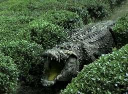 《百万巨鳄》特效解密 逼真巨鳄出没上海电影节