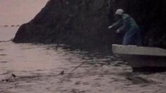 海豚湾 片段