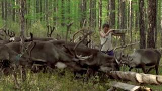 大兴安岭的深处 那个女人和中国仅剩的驯鹿