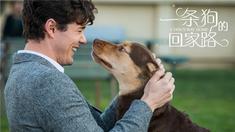 """一条狗的回家路 """"家是归途""""正片片段"""