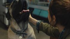 一条狗的使命2 推广曲MV