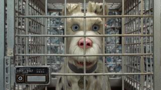 流浪狗询问市长的狗市长是不是有什么阴谋 但它并不正面回答