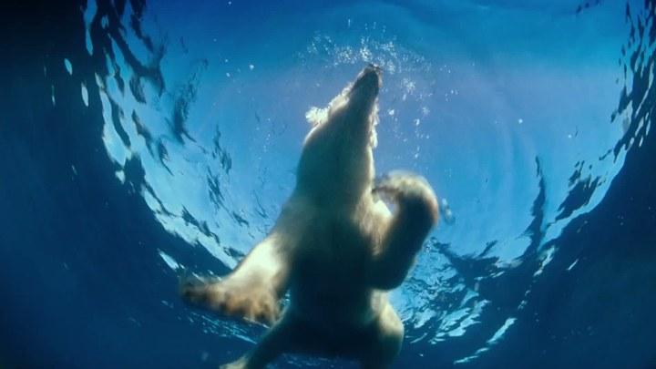 北极 花絮2:水下生命