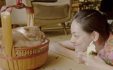 《租赁猫》预告片1