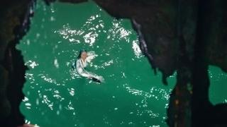 婆婆被阴险的科学家打到水里 发现声纳关闭集体跳到海底