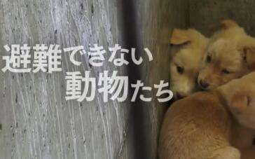 《为狗狗命名的日子》 预告片2
