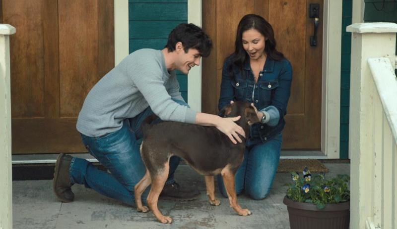 """《一条狗的回家路》""""家是归途""""正片片段 为何回家引网友热议"""