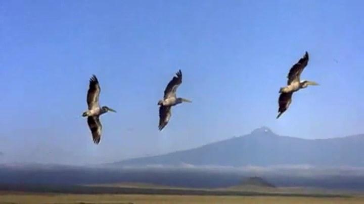 迁徙的鸟 美国预告片