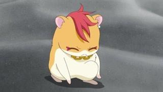 软萌小仓鼠变身巨型莫西干 有点帅有点蠢