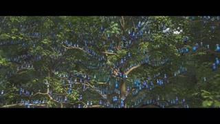 蓝金刚鹦鹉全体出动来阻止人类破坏他们的家园