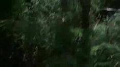 死亡繁殖 先行版预告片