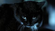 猫脸老太太 预告片