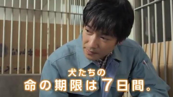 向日葵与幼犬的7天 电视版