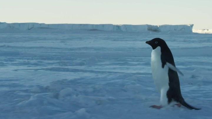 企鹅 预告片4