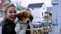 《一条狗的使命》 再次转生陷窘境 惨遭新主人遗弃