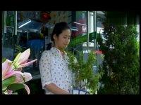 小菊的春天全集抢先看-第34集-抢先看02