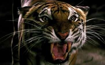 《金矿》片段 影帝马修·麦康纳惊险对峙猛虎