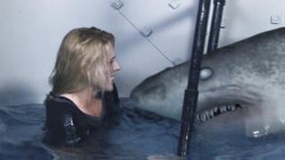 鲨鱼口下能否逃生?