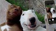 成精了!刚学会自拍的狗狗,立刻拉着好友拍了起来!