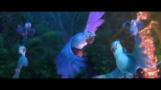 动物世界演出团金刚鹦鹉大C位了解一下