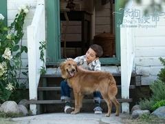 《一条狗的使命》原片片段 萌犬柯基温暖相伴