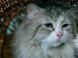 激萌喵星人驾到 观众携爱猫助力《九条命》