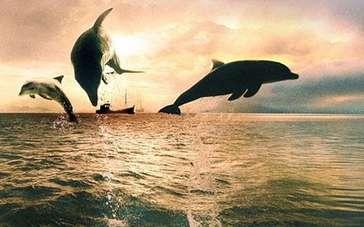 《海豚湾》预告片
