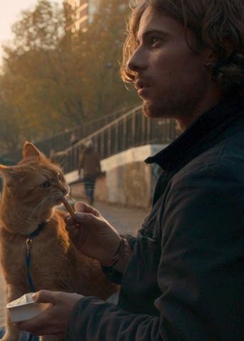 《流浪猫鲍勃》定档预告 小猫与主人宣誓定终身