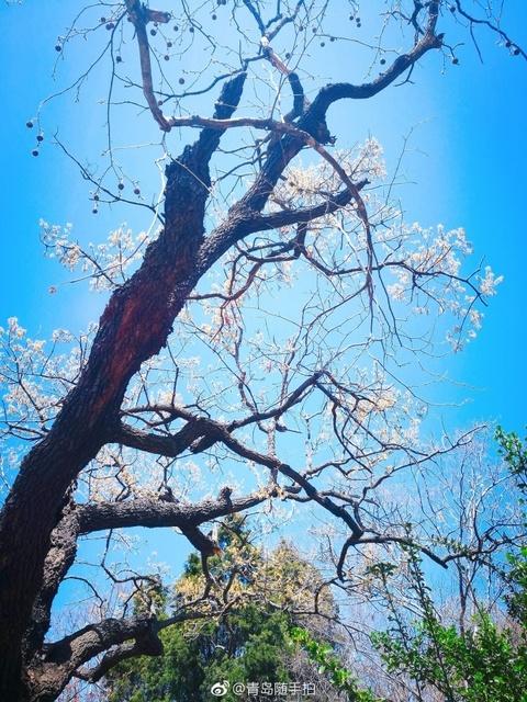 四月里的青岛八大关,满眼春色绝美不已