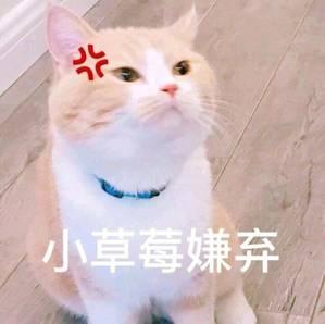 表情 脸红害羞的猫咪 小草莓坏笑 的表情包,逗比拯救世界 专业的表情包搜索网站 表情