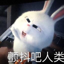 表情 宠物大作战兔子壁纸 兔子头简笔画 猫和老鼠大作战游戏 小叮当拯救精灵大  表情