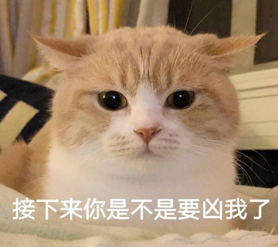 表情 接下来你是不是要凶我了 一组萌萌哒小猫咪表情包 猫咪表情 发表情 表情