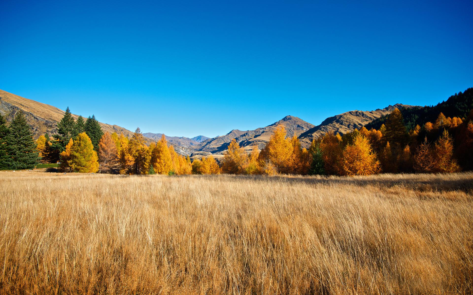 金色深秋风景桌面壁纸
