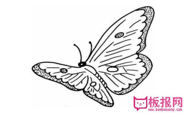 表情 漂亮的蝴蝶简笔画,蝴蝶简笔画教程大全 天天板报网 表情