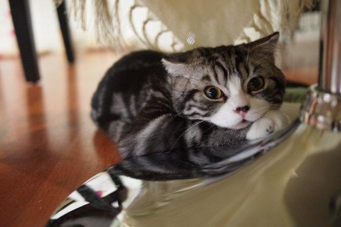 猫猫壁纸桌面 亲亲密密一家子的画 男人喔 表情图片