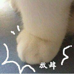 表情 放肆 猫腿 放肆表情 发表情 fabiaoqing.com 表情