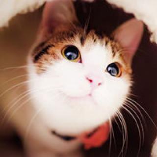 表情 可爱喵星人卖萌图片头像 头像图片表情包大全 表情