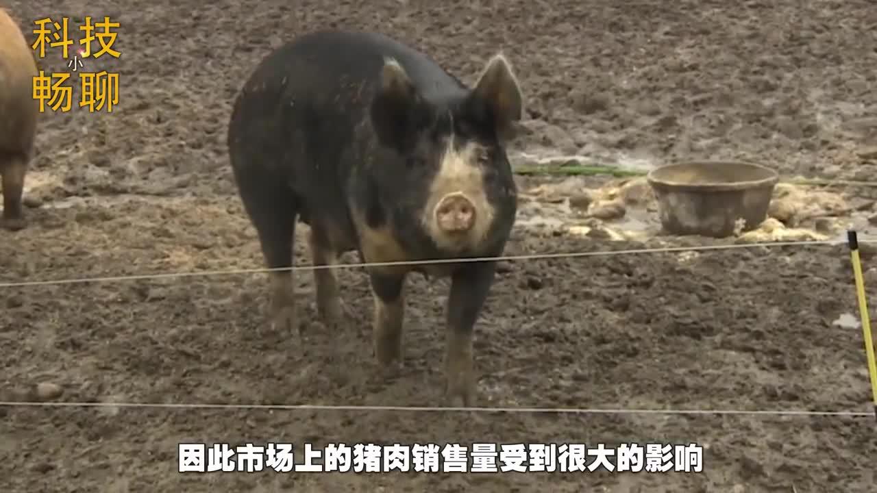感染了猪瘟有什么症状?猪瘟症状-_搞养殖的_新浪博客