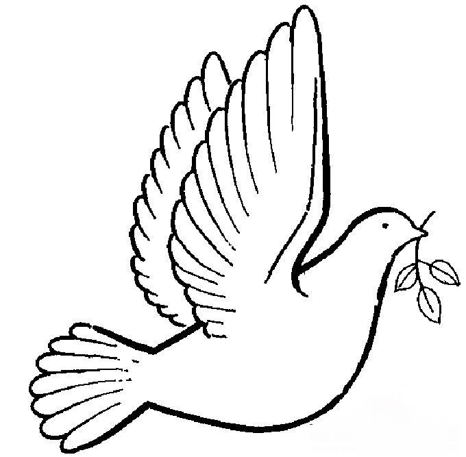 表情 嘴里衔着橄榄枝的和平鸽画法 如何画好和平鸽 育才简笔画 表情