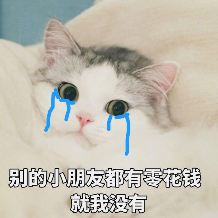 表情 猫咪表情包262 生气 怒了 我投降 怂成一团 荡秋千 表情