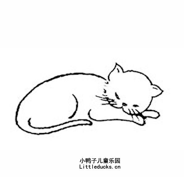 可爱的小猫的简笔画图片大全 动物简笔画猫,猫简笔画图片动物简笔