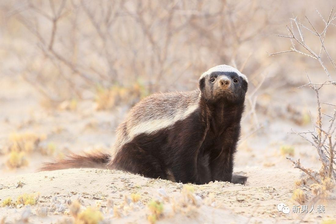 表情 要说动物里脾气最大的,一定是社会我 平头哥 搜狐宠物 搜狐网 表情