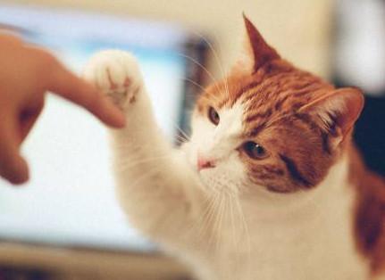 表情 小草莓击掌猫咪表情包 斗图表情包 怼人表情包 生气表情包 看猎奇 表情