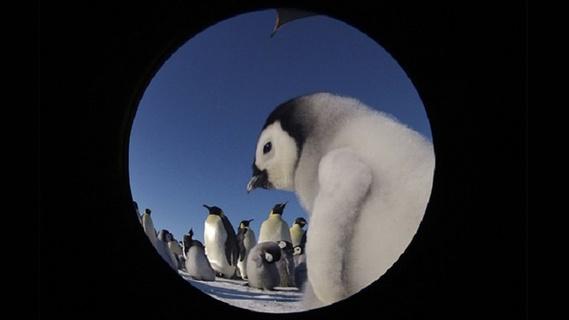 小雪.企鹅的故事