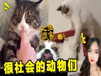 社会猫大战古惑狗惊呆铲屎官,超萌的宠物竟如此社会..