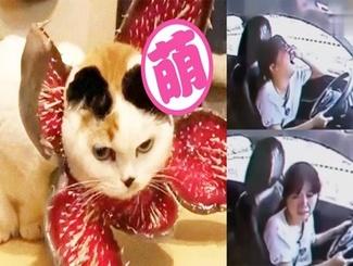 萌猫咪COS噬元兽毫无违和感,女子驾考五次失败车内崩溃